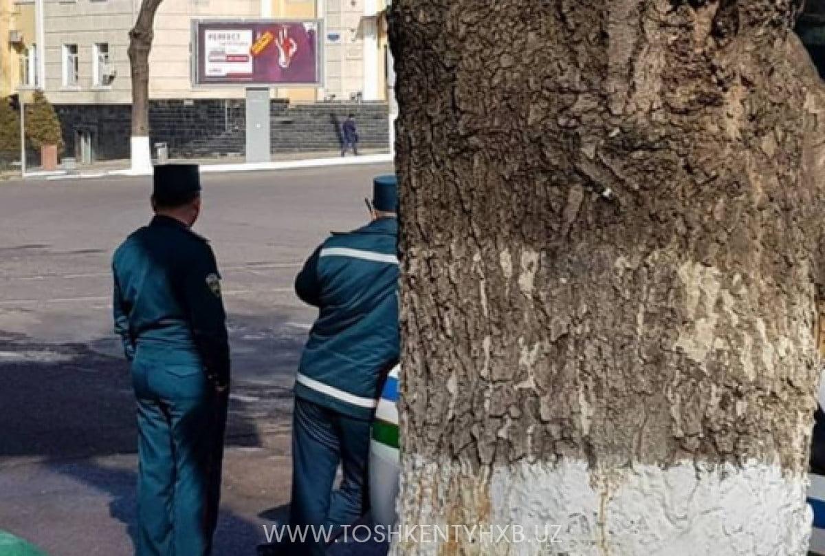 ГАИ за деревом