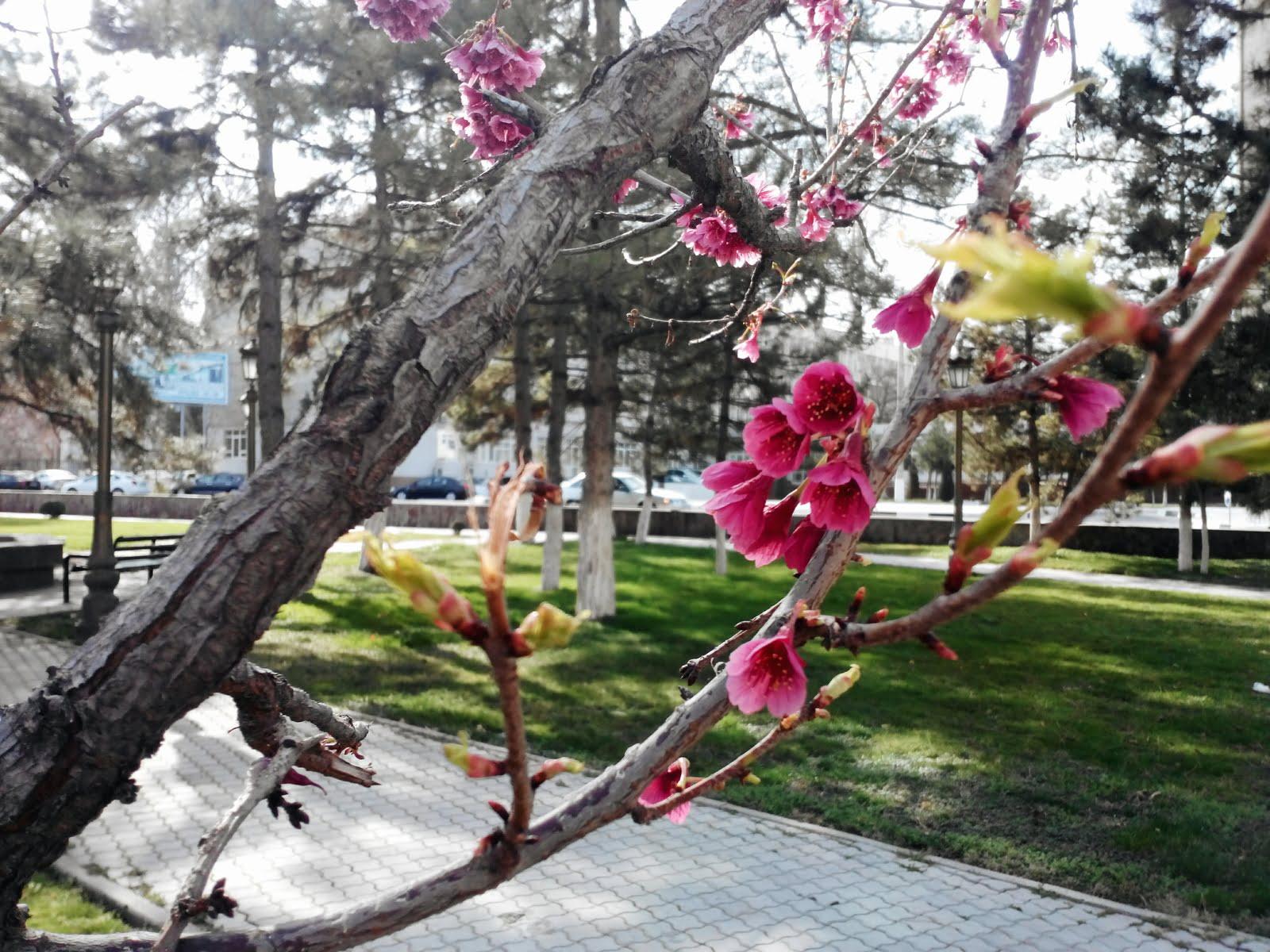 Ташкент Навруз